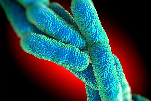 Image de Legionella